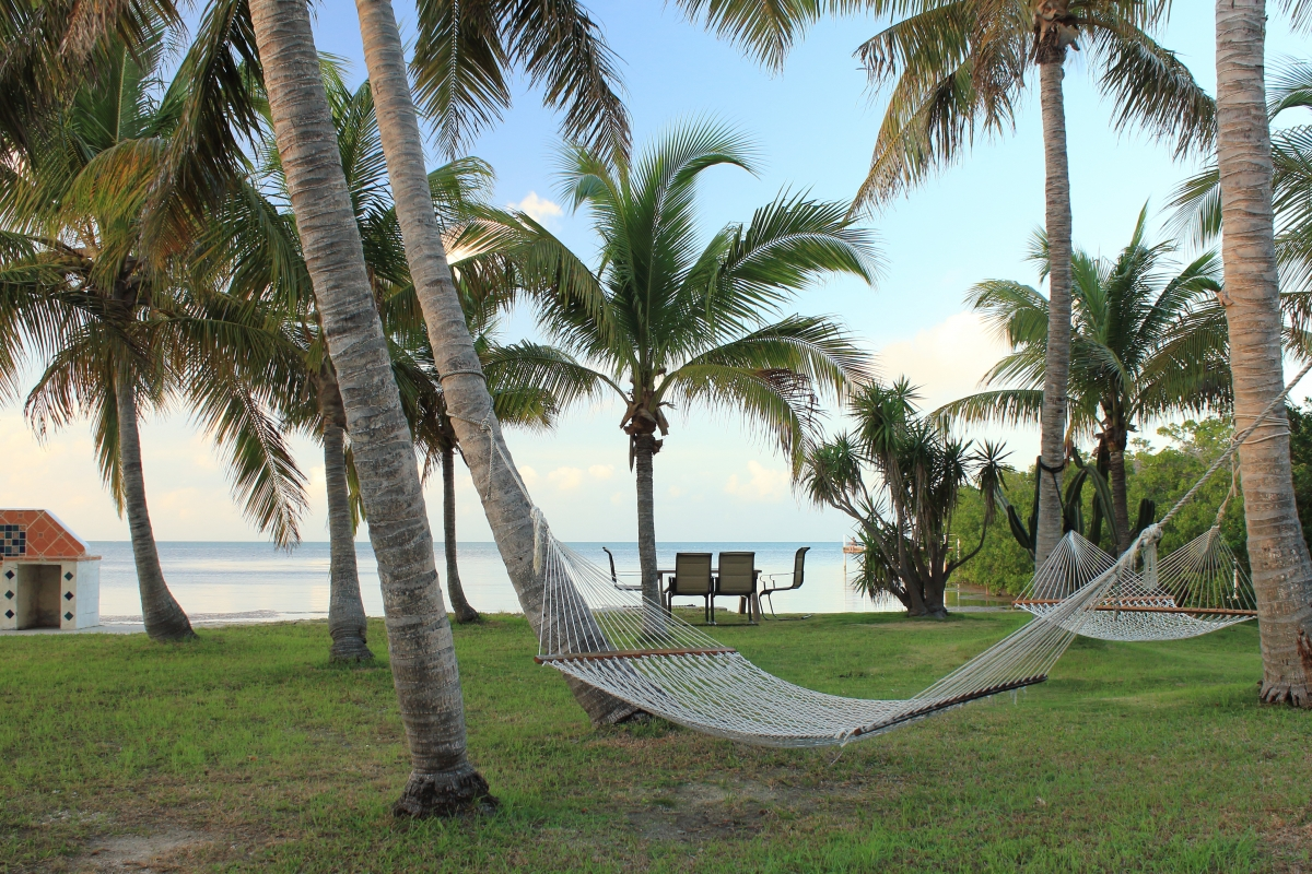 Hammock's under coconut trees